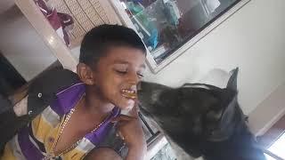 Funny dog with boy