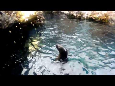 Osaka Aquarium KAIYUKAN Part 1