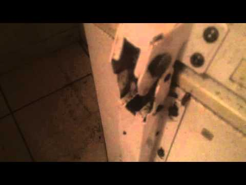German Roaches | Florida Home Infested with German Roaches