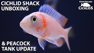 Fish Unboxing: The Cichlid Shack