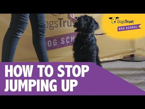 How To Stop Your Dog Jumping Up | Dogs Trust Dog School