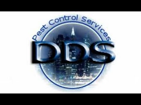 DDS Pest Control Bed Bug Commercial WE Specialize in Bed Bug Service