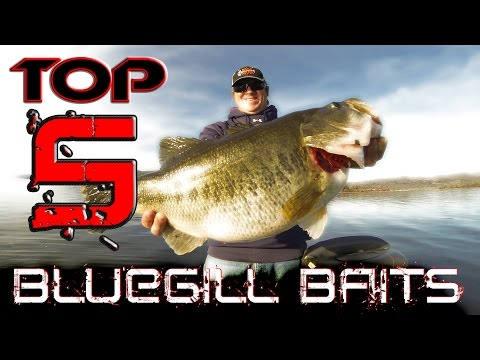 Best Baits to Fish When Bass are Eating Bluegill!