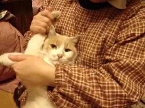 Cat Dancing – Hokey Pokey