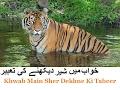 Khwab Main Sher Dekhne Ki Tabeer |sher dekhna |Khwab Main Sher ko Marna By Maulana Hafiz abdul Fatah