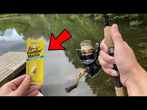 Panther Martin Spinners Catch EVERYTHING Pond Fishing
