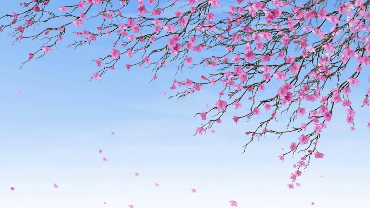 Цветы фото фон 8