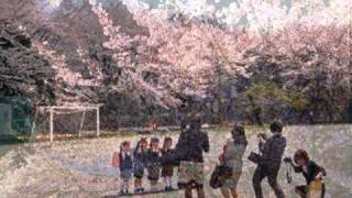 SAKURA yo (桜よ)