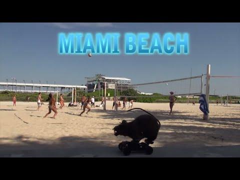 Miami Beach Spring Break Rat Hidden Camera Practical Joke