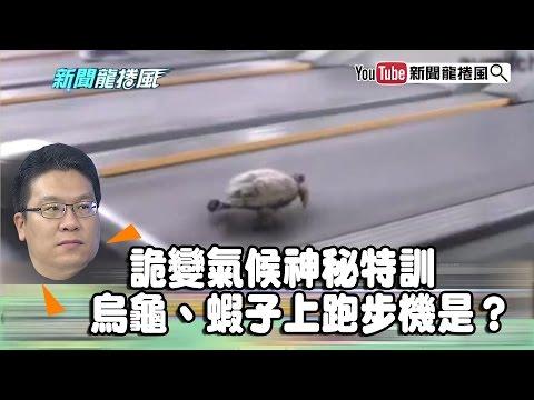 《李奇嶽》詭變氣候神秘特訓 烏龜、蝦子上跑步機是?