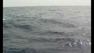 Dolphins Boat Tour, Puerto Rico, Gran Granaria