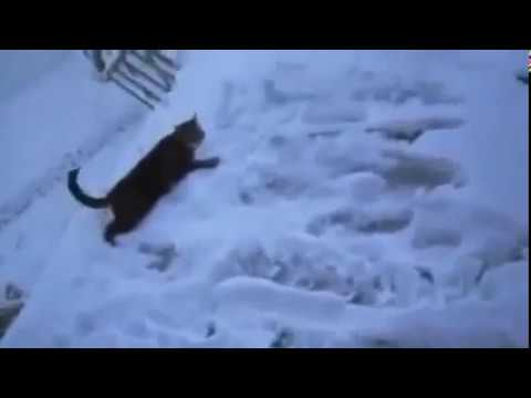 Funny cats jumping fails