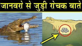 जानवरों के बारे में कुछ रोचक बाते    Amazing facts of Animals in HINDI