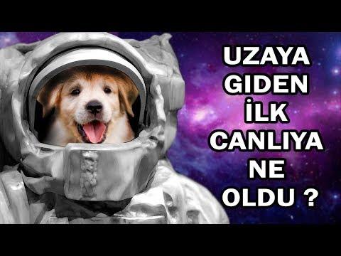 İzlerken Ağlamamaya Çalışın ;  Uzaya Gönderilen İlk Köpek Laika'nın İnanılmaz Hikayesi.