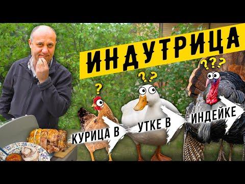 Блюдо Кощея! ИНДУТРИЦА или TURDUCKEN - матрёшка из трёх птиц : индейка + утка + курица в одном блюде
