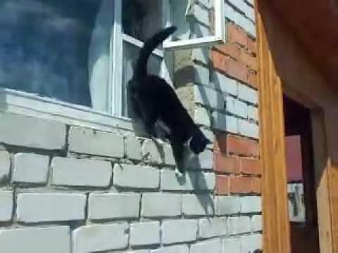Кот прыгает с высоты