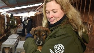 50 Dogs Rescued from Korean Dog Meat Farm
