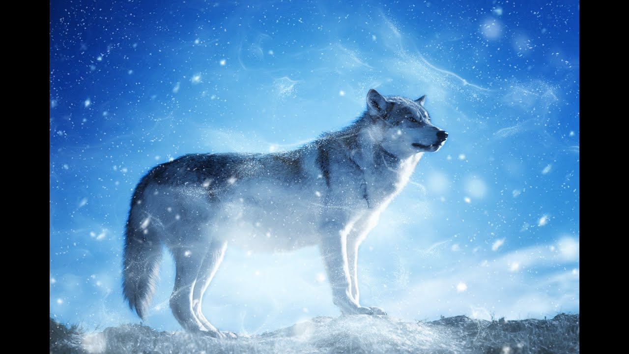 Download Maria Daines ~ Lullaby of Wolves