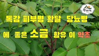 붉나무 피부병 치질 당…