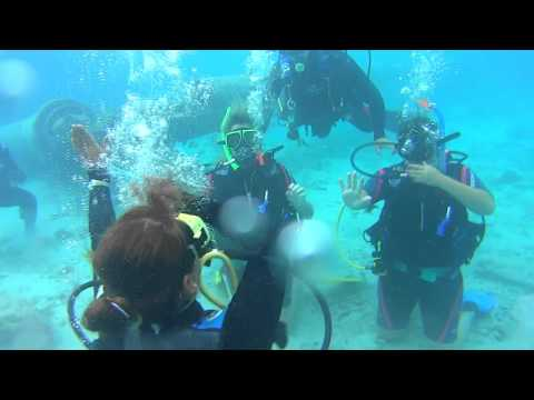 curacao - dive with dolphins