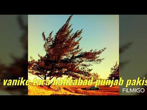 Download Lamia rawa asa mian wali ja ana ay song
