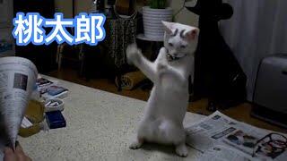 立って踊る猫 thumbnail