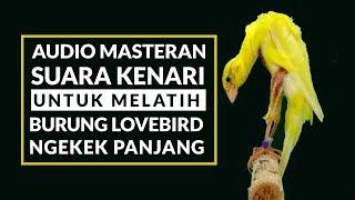 Download Mp3 Melatih Lovebird Ngekek Panjang Dengan Masteran Suara Kenari