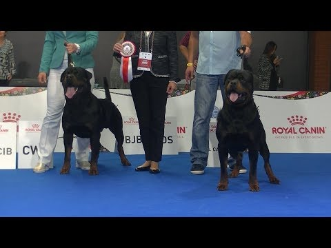 ROTTWEILER !! Euro dog show 2018 in Warsaw