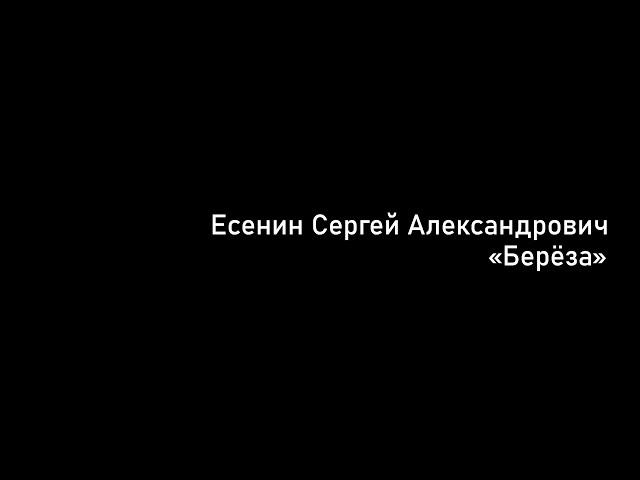 Изображение предпросмотра прочтения – АнастасияРемеслова читает произведение «Берёза» С.А.Есенина