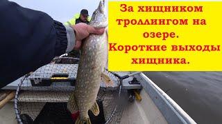 Осенняя рыбалка на озере троллингом или рыбачим на дорожку Тrolling fishing My fishing