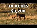 Cheap Land for Homesteading! Scouting 10