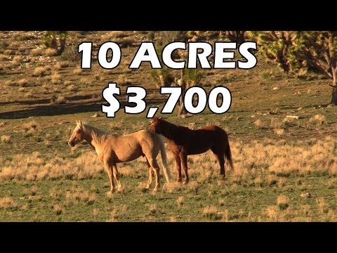 Cheap Land for Homesteading! Scouting 10 Acres for $3,750, Grand Canyon Arizona (EP. 1)