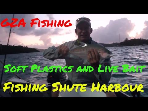 Soft Plastic And Live Bait Fishing Shute Harbour Whitsundays