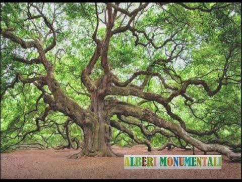 Gli alberi monumentali
