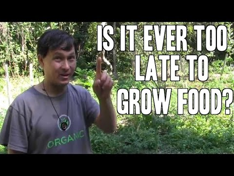 Is it Ever Too Late to Grow Food? Baltimore Community Garden