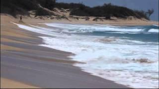 Arnica Montana - Sea Sand And Sun