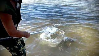Рыбалка на сазана Закидушки на макуху в Ахтубе