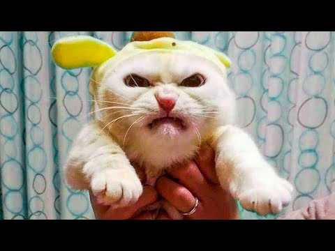 Funniest  Cats and Dogs  - Awesome Funny Pet Animals Life Videos