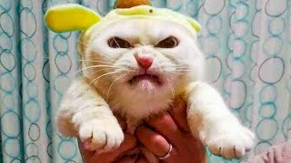 Funniest  Cats and Dogs   Awesome Funny Pet Animals Life Videos