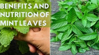 8 Amazing Health Benefits And Nutrition of Mint Leaves - HealthyTube