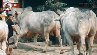 The Biggest Shibbi Nabab Sultan Part 02 JJKH Sharif Agro 2017 RBGCH