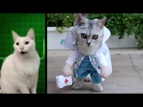 Miss Polly had a Dolly - Cats Version - Singing Cats - Cats Parody