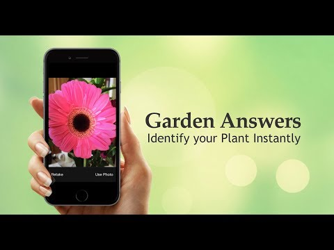 My Garden Answers: Identify Your Plant Instantly