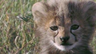 Малыш леопард. Обои на Андроид.