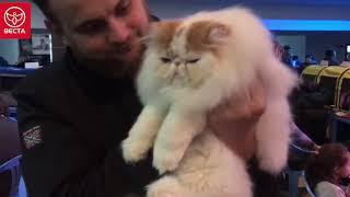 Video с выставки кошек Павлодар 18 ноября