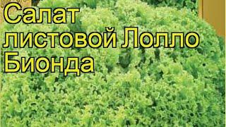Салат листовой Лолло Бьендо. Краткий обзор, описание характеристик, где купить семена