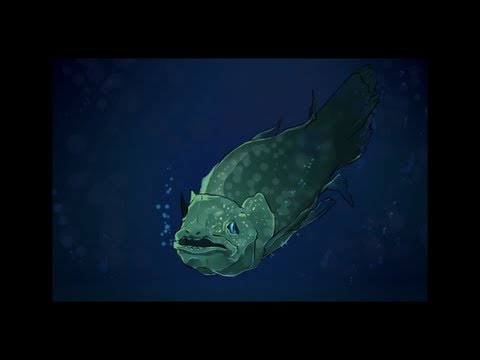 A Fish Lost in Time: the Coelacanth