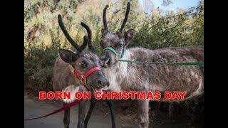 LAGU ROHANI NATAL BORN ON CHRISTMAS DAY