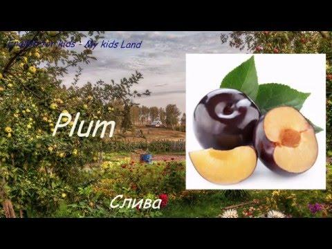 Ответы@: слива - это фрукт или ягода?