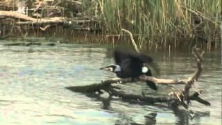 Na potep: Izvir reke Soče